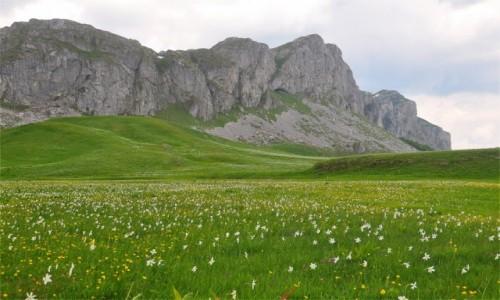 Zdjecie CZARNOGÓRA / Kolasin / Moračke planine / Góry Dynarskie w Czarnogórze