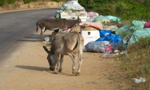 Zdjecie CZARNOGÓRA / brak / Droga z Baru do Ulcinj / Osiołki buszujące w śmieciach