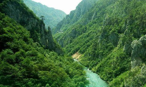 Zdjecie CZARNOGÓRA / Ok.Durmitor / brak / kanjon Tary....