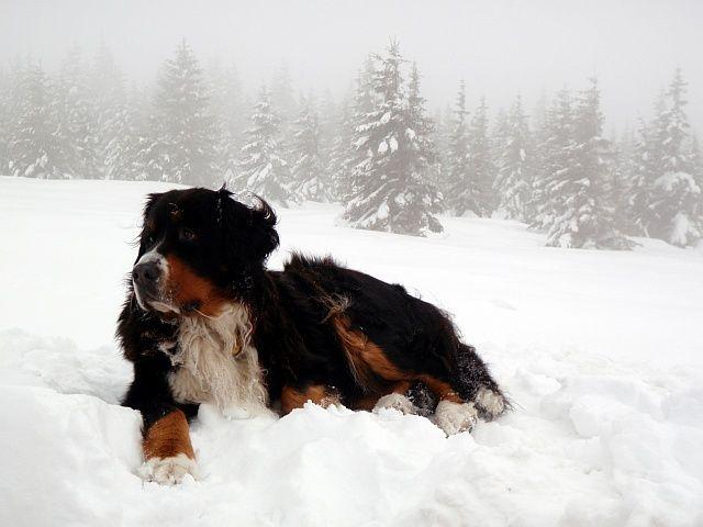 Zdjęcia: stok Śnieżki po czeskiej stronie, Sudety, Konkurs - No i gdzie jest, CZECHY