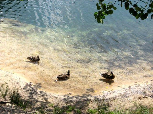 Zdjęcia: Adrspach, kralowo-hradecki kraj, w skalnym jeziorze..., CZECHY