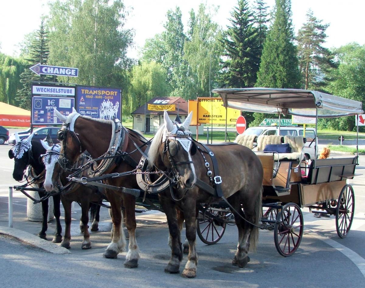 Zdjęcia: Karlsztejn, Kraj środkowoczeski, powiat Beroun, W oczekiwaniu na chętnych do jazdy, CZECHY