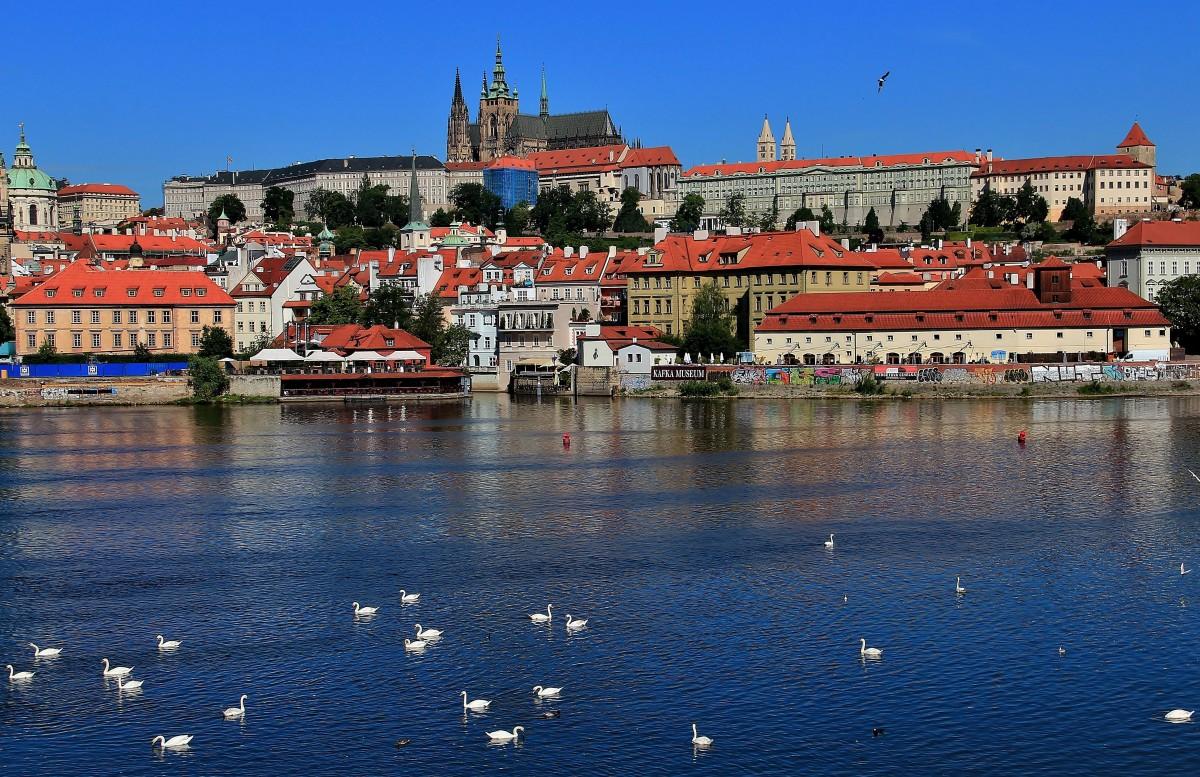Zdjęcia: Praga, Czechy, Łabędzie na Wełtawie, CZECHY