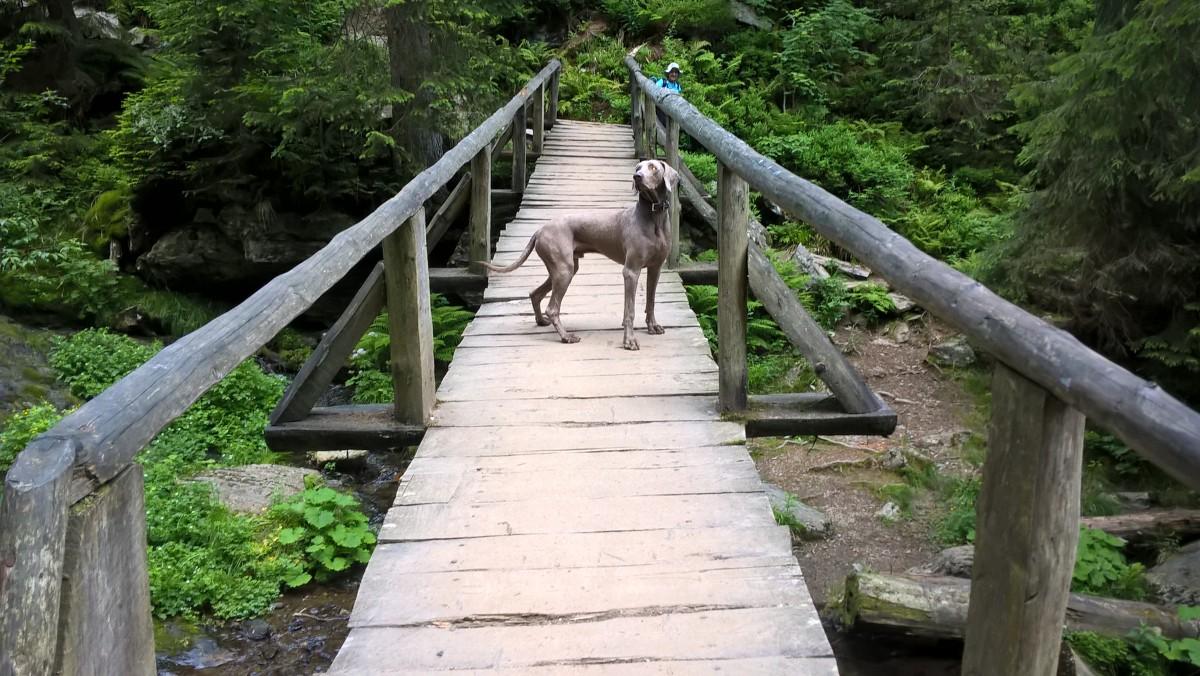 Zdjęcia: Pradziad, Strażnik mostu, CZECHY