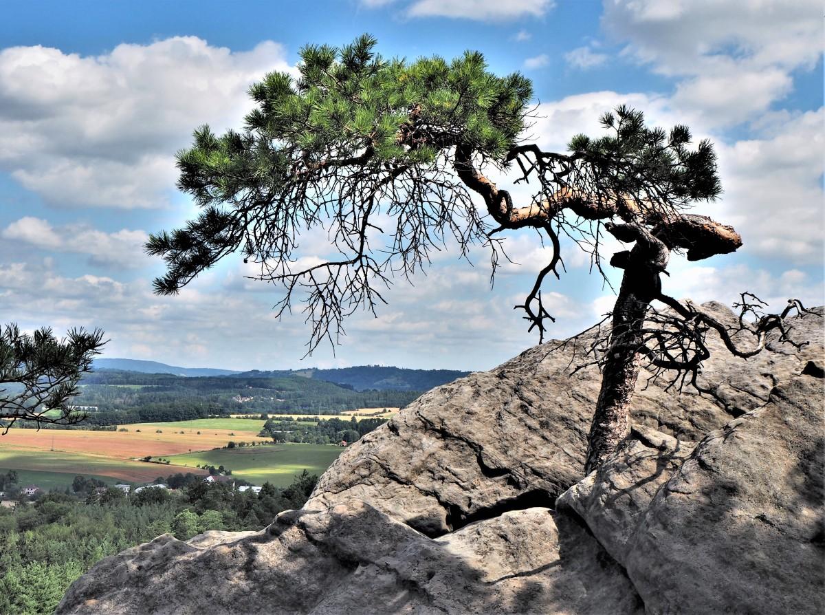 Zdjęcia: Hruboskalsko, Czeski Raj, na skale..., CZECHY