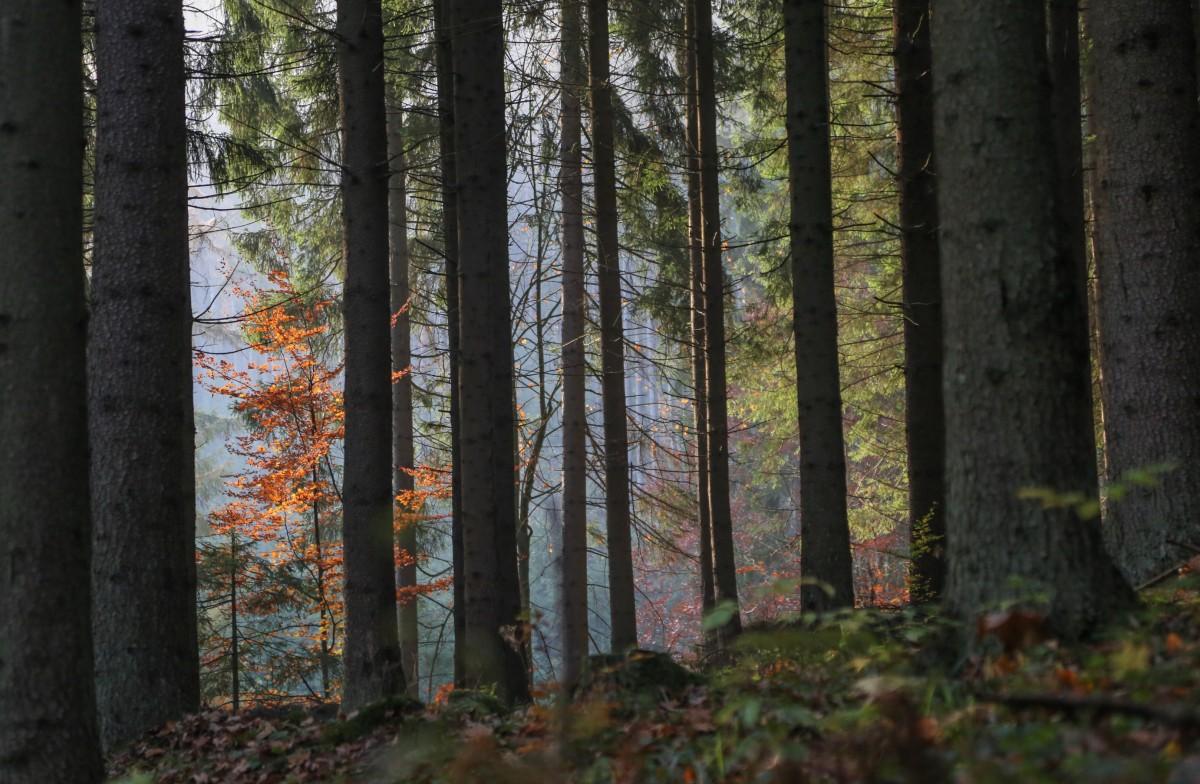 Zdjęcia: Adrszpasko-teplickie Skały, płn.-wsch. Czechy, Jesień w Sudetach, CZECHY