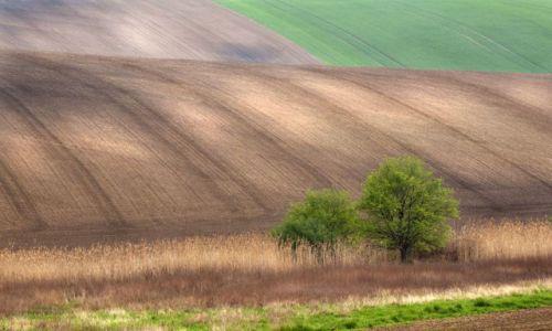 Zdjecie CZECHY / Morawy / Nasledovice / pola