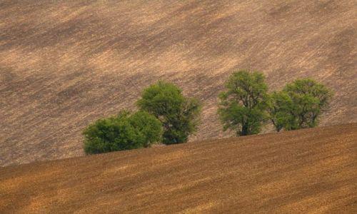 Zdjęcie CZECHY / Morawy / Nasledovice / zielone na brązowym