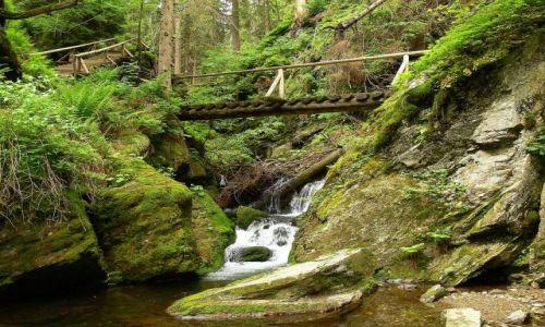 Zdjecie CZECHY / Morawy- Jesennik Wysoki / żółty szlak- Wodospady Białej Opawy z Karlowej Studanki na Pradziada / chwila z dziką przyrodą