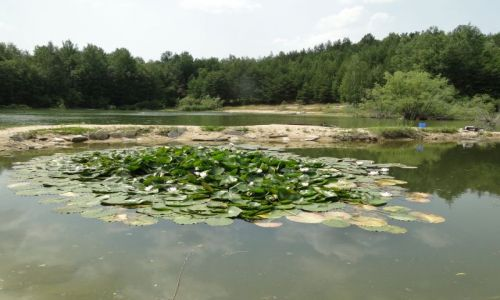 Zdjęcie CZECHY / Jesenik / Piseczna / Jeziorko w Pisecznej