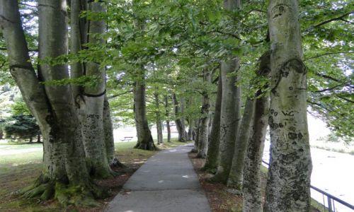 Zdjecie CZECHY / Góry Opawskie / Park Priessnitza / Aleja bukowa