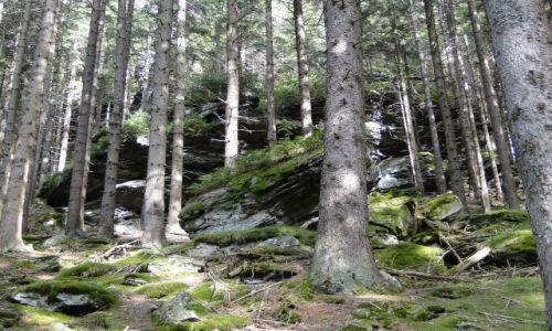 Zdjecie CZECHY / Góry Opawskie / Rejviz / Formacje skalne w Rejviz