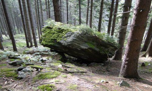 Zdjecie CZECHY / Góry Opawskie / Rejviz / Życie na skale