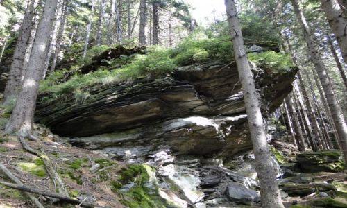 Zdjecie CZECHY / Góry Opawskie / Rejviz / Formacje skalne w lesie Rejviz