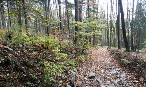 Zdjęcie CZECHY / okolice Jesenika / po drodze / Mżawka w górach