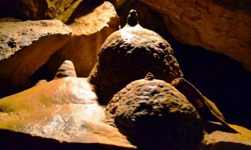 Zdjęcie CZECHY / kraj liberacki / Bozkov / Dolomitowe Bozkovské jeskyně