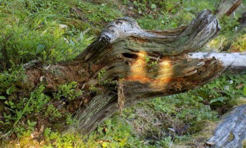 Zdjęcie CZECHY / Karkonosze / Dolina Łaby / Karkonoskie coccodrillo