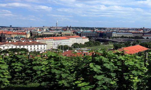 Zdjęcie CZECHY / Praga / Hradczany / Praskie winnice