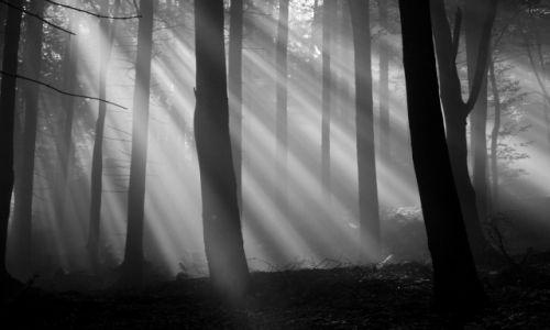 Zdjecie CZECHY / Police nad Metui / Okoliczne lasy / Rano