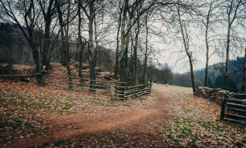 Zdjęcie CZECHY / Góry Jastrzębie / szlak na Jański Wierch / Zagroda