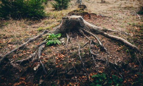 Zdjęcie CZECHY / Góry Kamienne / Szlak na Szpiczak / Pozostałości