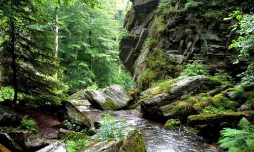 Zdjecie CZECHY / kraj morawsko-�laski / Resz�w / Rzeka w�r�d ska