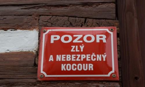 Zdjęcie CZECHY / Kralovohradecki / Kuks / Czeskie kocury:)