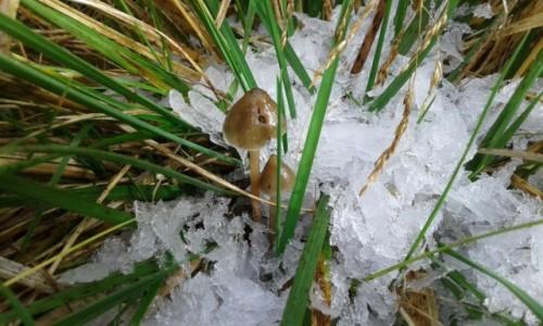 Zdjecie CZECHY / - / Masyw Śnieżnika / PRZEBIŚNIEGI