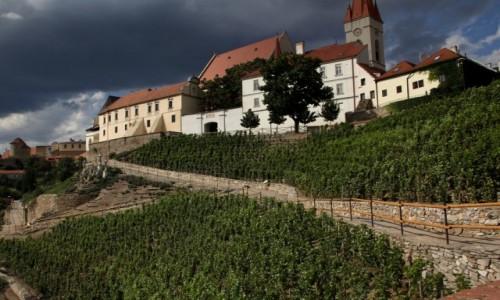Zdjęcie CZECHY / Południowe Czechy / Znojmo / Morawskie winnice