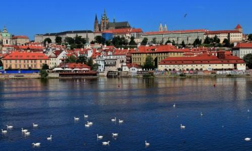 Zdjęcie CZECHY / Czechy / Praga / Łabędzie na Wełtawie