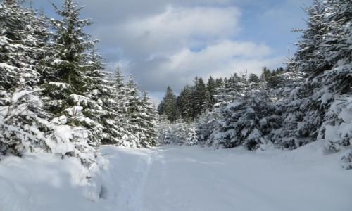 Zdjecie CZECHY / Beskidy / Billa / Taka zima