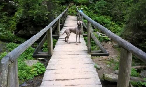 CZECHY / - / Pradziad / Strażnik mostu