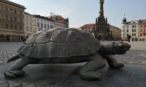 Zdjecie CZECHY / Morawy / Ołomuniec / Wiosna nadchodzi też powoli