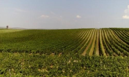 Zdjęcie CZECHY / Morawy Południowe / Morawy Południowe / Winnice w Morawach Południowych