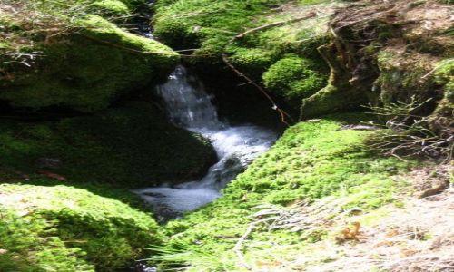 Zdjecie CZECHY / brak / las  w górach / wodospadzik