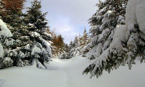 Zdjecie CZECHY / Sudety / Szlak na Śnieżkę / Konkurs - Droga na Snezke