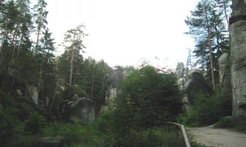 Zdjęcie CZECHY / Kralowo-Hradecki Kraj / Adrspach / skalny las
