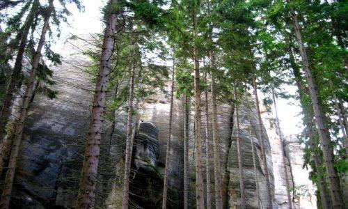 Zdjęcie CZECHY / Kralowo-Hradecki Kraj / Adrspach / skały Adrpachu