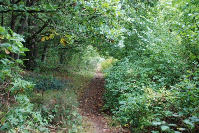 Zdj�cia: Silkeborg, Jutlandia, Poszukiwanie jesieni w Silkeborg, DANIA