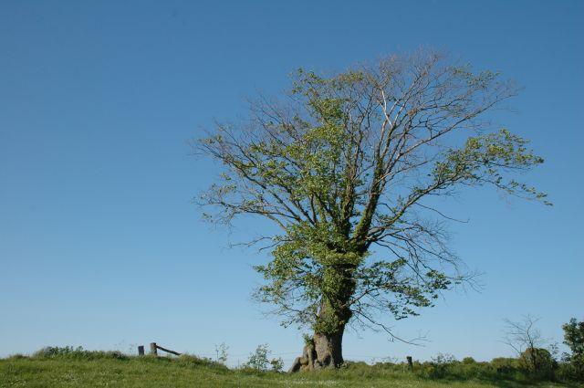 Zdj�cia: Hammeren, Bornholm, drzewo, DANIA