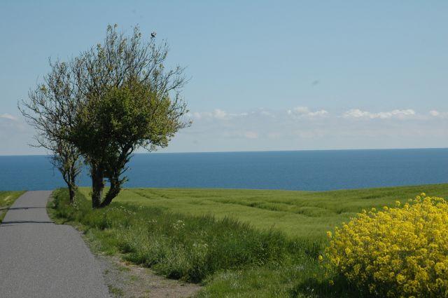 Zdjęcia: Gudhjem, Bornholm, drzewo, DANIA