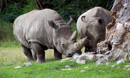 Zdjęcie DANIA / Sjeland / safari bezkrwawe / Zakochana para