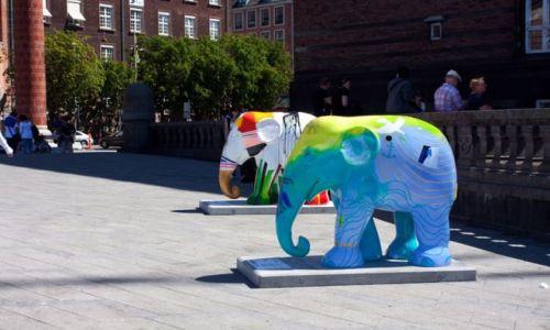 Zdjęcie DANIA / - / Kopenhaga / Elephant Parade