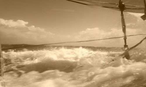 Zdjęcie DANIA / Jutlandia / Morze Północne / natura