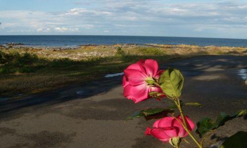 DANIA / Wyspa Bornholm / Pejzaż morski w okolicy Salenebugt / Wyprawa rowerowa na Bornholm