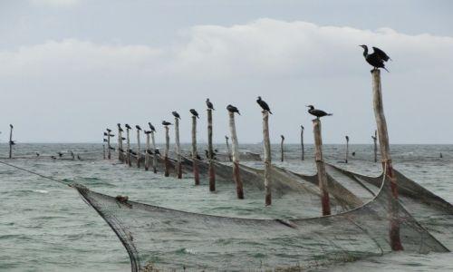 Zdjęcie DANIA / Dania / Plaża nad Wielkim Bełtem / Kormorany-