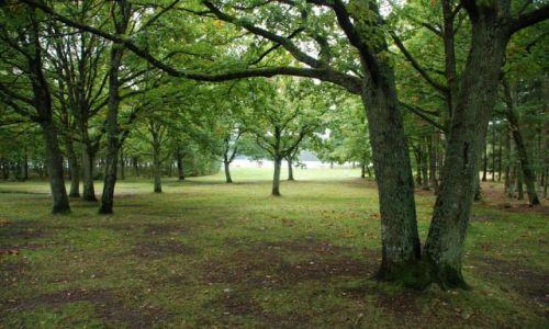 Zdjecie DANIA / Jutlandia / Silkeborg / Poszukiwanie jesieni w Silkeborg