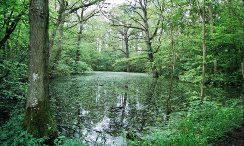 Zdjecie DANIA / Lasy wokol fiordu w Roskilde / Lasy otaczajace fiord morza Polnocnego w Roskilde, na wyspie Zelandii (Sjaeland) w Danii / las zadumany....