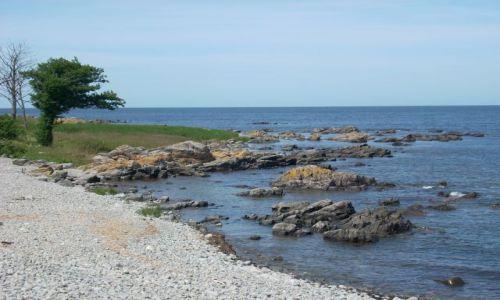 DANIA / Bornholm / Melsted / Bornholm. Kamienna plaża z drzewem.