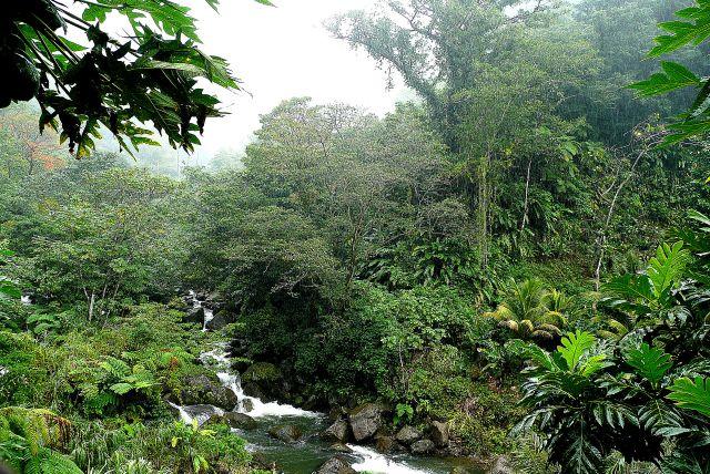 Zdjęcia: rainforest, east coast, Cesarriver, DOMINIKA